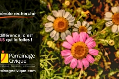 Benevole-recherche-01